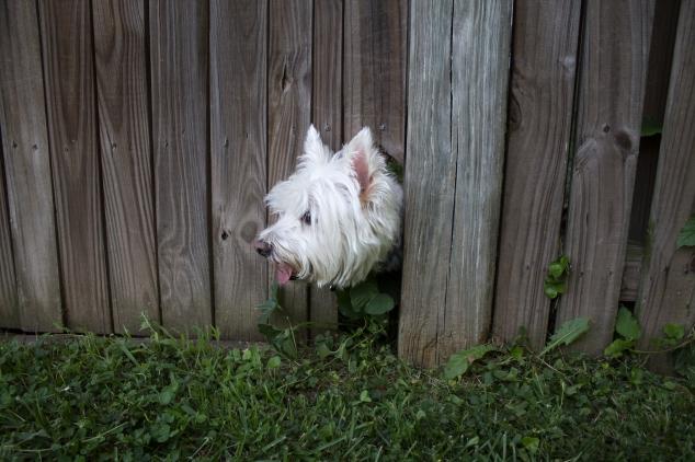 11-peeking-at-the-outside-world